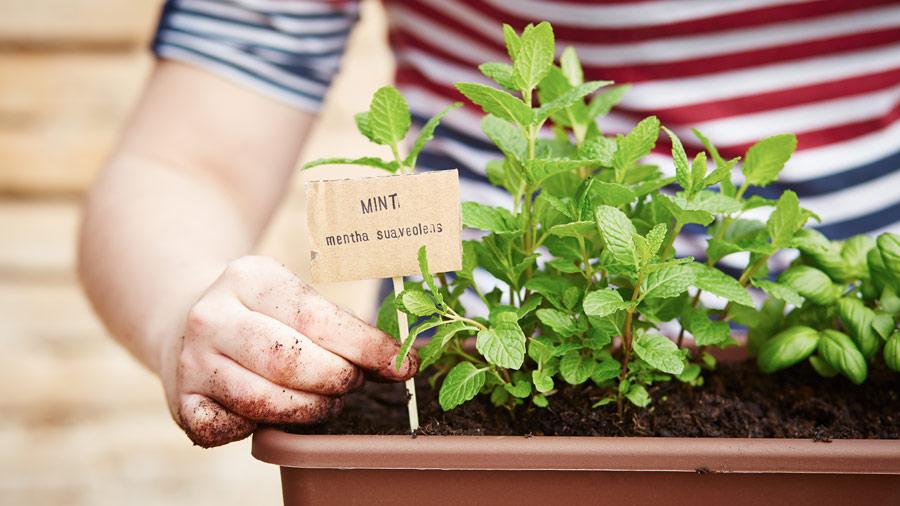 Grow Your Own Herbs Amazing Herb Garden
